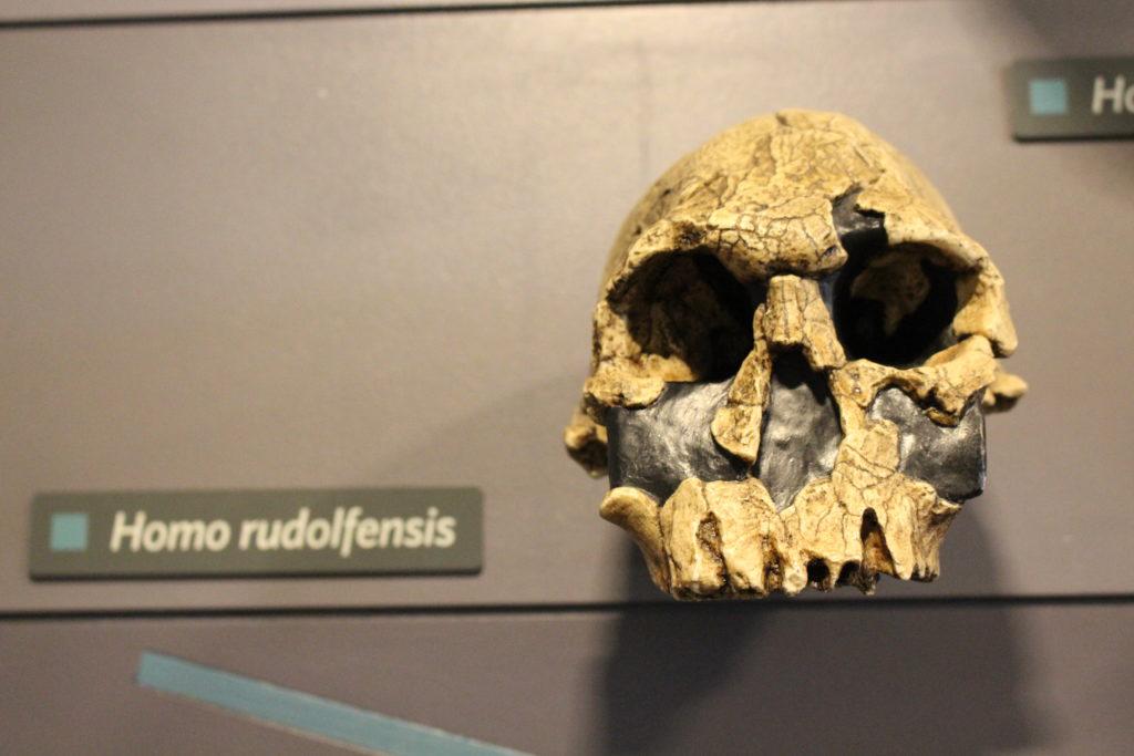 National History Museum Human Evolution